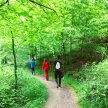 Silent Forest Walk image