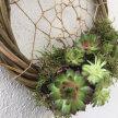 Botanical Dreams - Flittons Nursery image