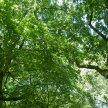 Half-term tree planting image