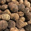 New York Nut Growers Association 2021 Summer Meeting image