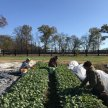 A Conversation with Farmers & Market Gardeners image