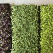 Farmer & Chef: From Seed to Microgreen image