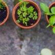 Planning Your Best Garden Ever image
