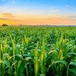 Crops, Seeds & Soil Tech (CSS) 4.0 2021 image