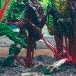 Vegetable Gardening Basics for the Home & Community Gardener image
