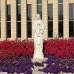 10:30 am Sunday Mass on 5/31/20 image