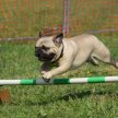 Agility For Fun! image