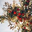 Fruit Tree Grafting image