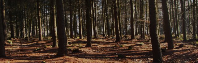 CPD Training - Practical Woodland Management