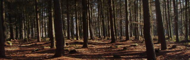 CPD Training - Setting up a Forest School at your Setting
