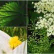 Hedgerow Medicine & Foraging Part 1 image