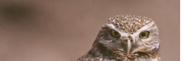 Burrowing Owl Workshop - June 7, 2019