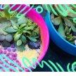Plant & sip! Terrarium  at 2:30pm $45 image
