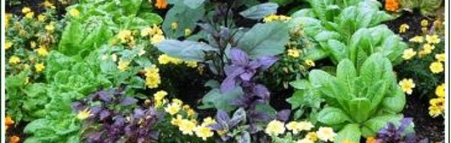 Companion Planting with Kate Cook