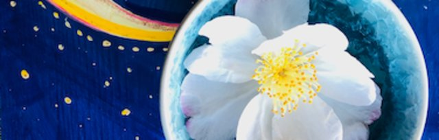 Zoom Event! Planting By The Moon: Empower Your Garden and Yourself