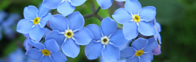 Forget me not appeal