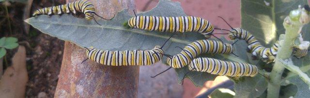 Monsoon Pollinator Gardening