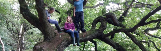 Ilkley May Half Term Forest School: 9-14 year olds