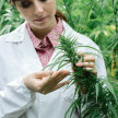 Medical Cannabis Symposium image