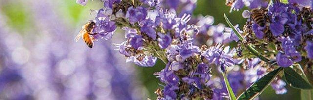 Japanese Aromatherapy 101