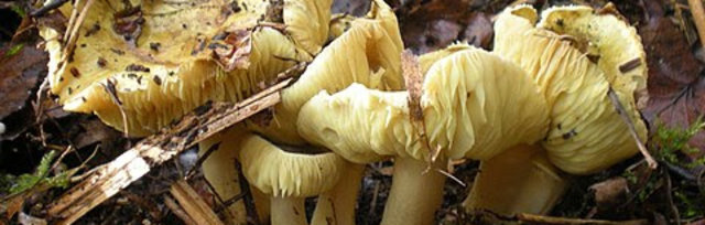 Fungi are a gardener's best friend: an overview of mycorrhizal fungi