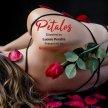 Pétalos / Petals image