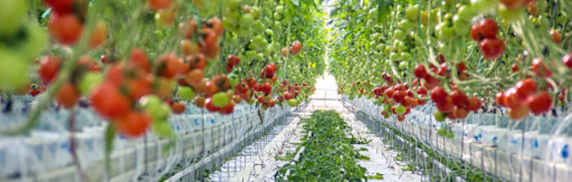 Controlled Environment Agriculture (CEA) 4.0 2021