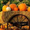 Pumpkin Palooza image
