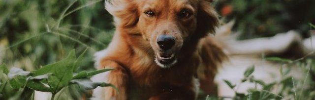 Running for Dogs, 5 Mile Charity Fun Run