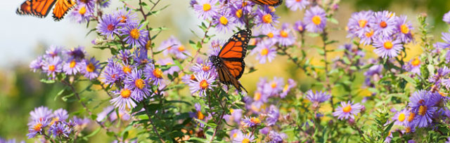 Create Your Own Butterfly Garden