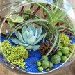 Plant & Sip! Terrarium Fun at 1:30 pm $45 image