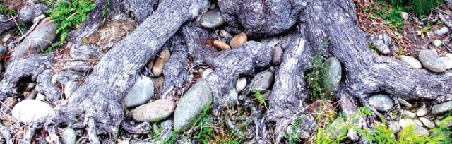Rooted and Grounded: Faith, Land and Creation