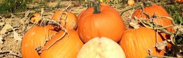 Country Pumpkins PYO