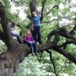 Ilkley May Half Term Forest School: 9-14 year olds image