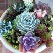 Plant & Sip! Terrarium Garden at 1:30 pm $45 image