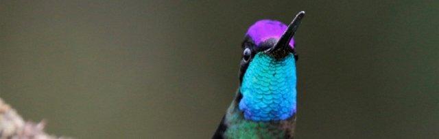 How Birds Work with John Buckingham