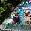 London Dog Week Fashion Show Brunch image