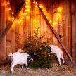 Winter Wonderland with Goats! image