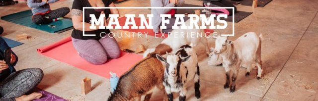 Maan Farms Goat Yoga & Wine | Winter