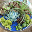 Plant & Sip! Plant Beauty at 1:00pm $45 UPLAND image