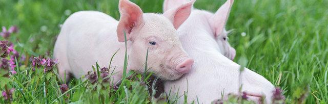 Tierethik – aktuelle Fragen und Themen