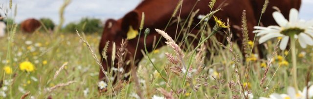 Farming For Nature Walk with Sinead Moran - October (Co.Mayo)