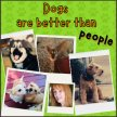Dogs Are Better Than People image