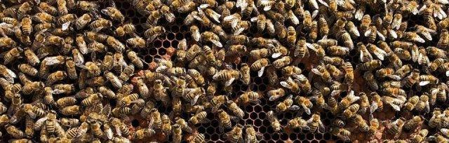 Honey Bee Behaviour short course