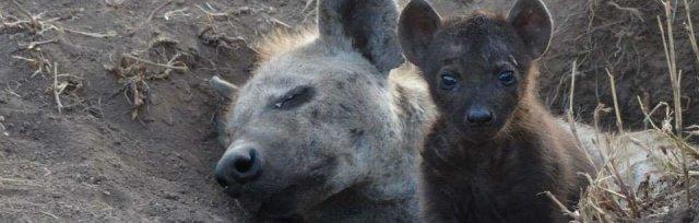 Cemetery Park Online - Hyena Talk