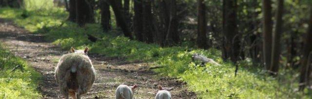 Wildlife and Farm Walk