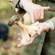 Introduction to Fungi Identification - Cambridgeshire image