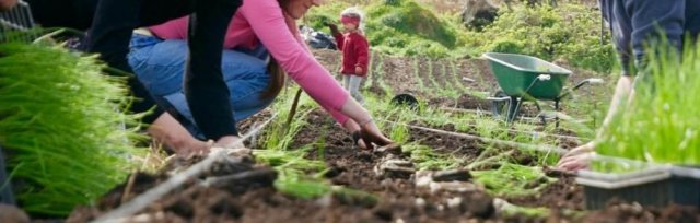 Farming For Nature Walk with Moyhill Community Farm - August (Co.Clare)