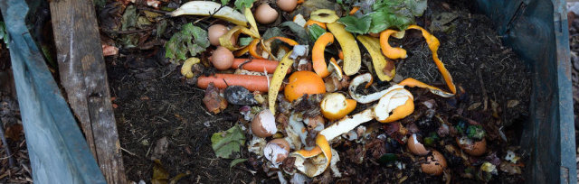 Digging Deep: Compost, Plant Nutrition, and Soil Biology
