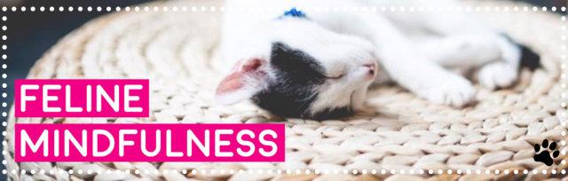 Feline Mindfulness